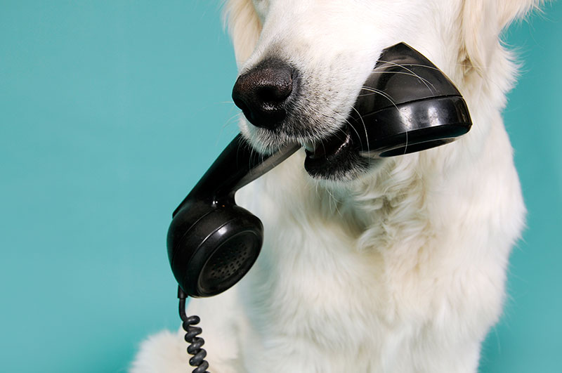 contact Canyon Pet Hospital today