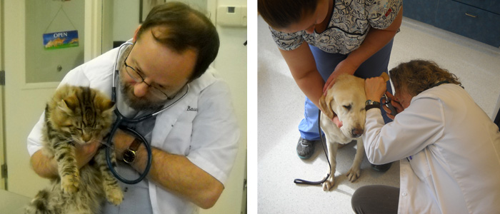 Physical Exams at Canyon Pet Hospital