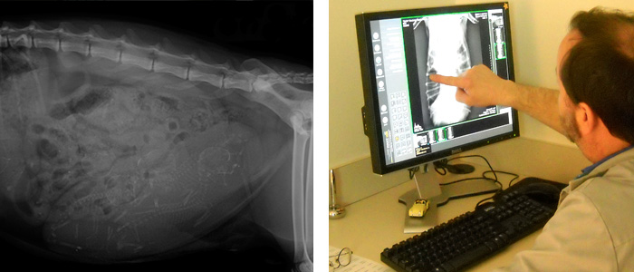 radiology services for pets