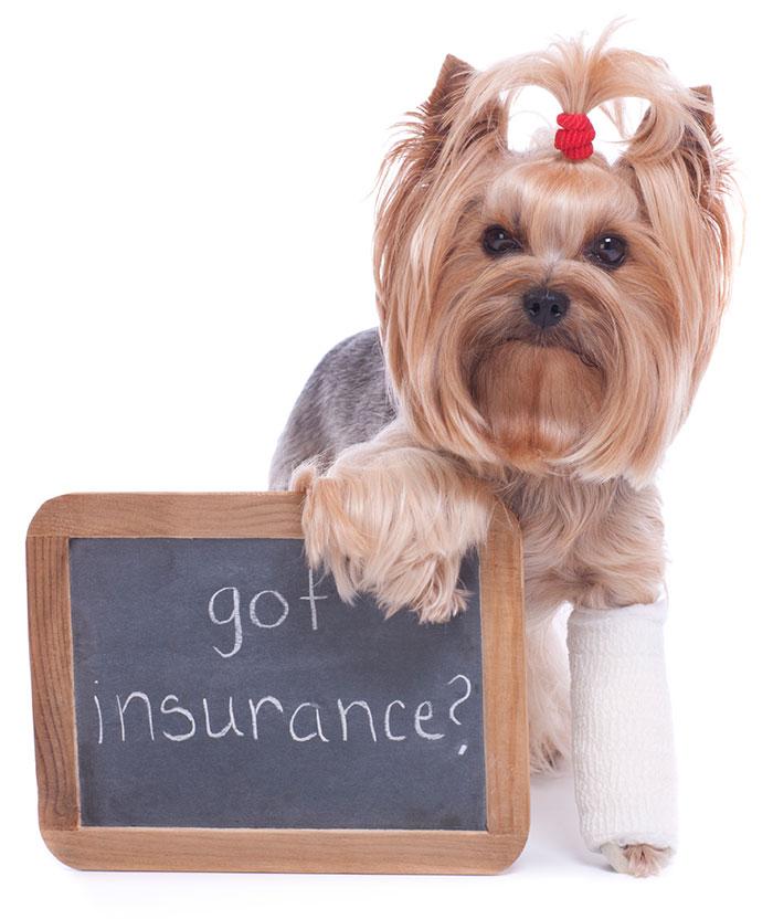 Got Pet Insurance?