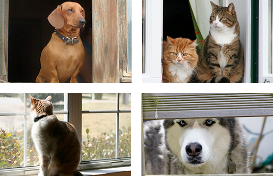Pets waiting for delivery of supplies
