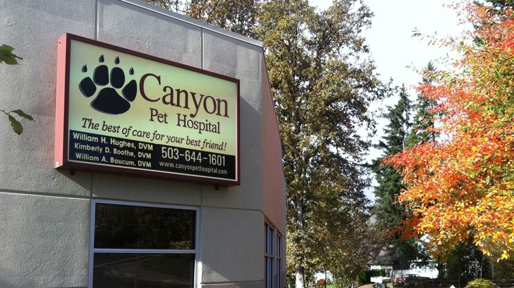 Welcome to Canyon Pet Hospital